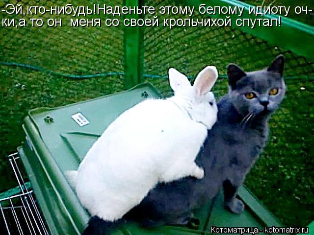 Котоматрица: -Эй,кто-нибудь!Наденьте этому белому идиоту оч- ки,а то он  меня со своей крольчихой спутал!