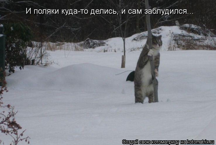 Котоматрица: И поляки куда-то делись, и сам заблудился...