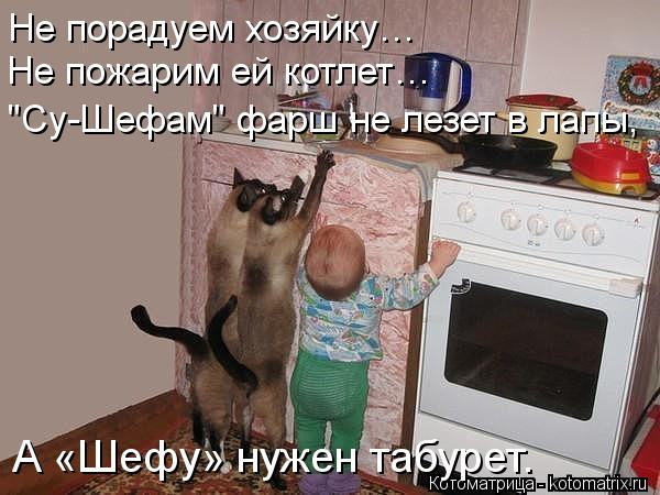 """Котоматрица: Не порадуем хозяйку… Не пожарим ей котлет… """"Су-Шефам"""" фарш не лезет в лапы, А «Шефу» нужен табурет."""