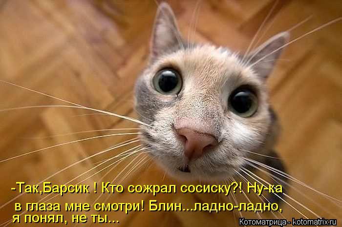 Котоматрица: -Так,Барсик ! Кто сожрал сосиску?! Ну-ка в глаза мне смотри! Блин...ладно-ладно, я понял, не ты...