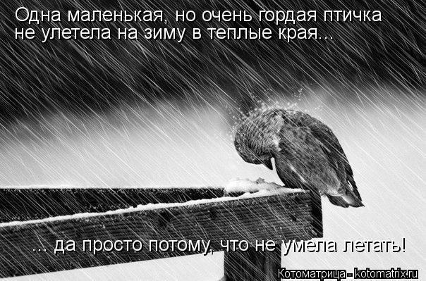 Котоматрица: Одна маленькая, но очень гордая птичка не улетела на зиму в теплые края... ... да просто потому, что не умела летать!