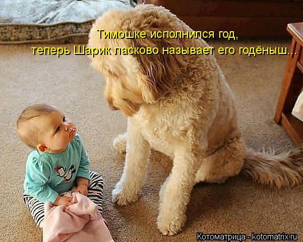 Котоматрица: Тимошке исполнился год, теперь Шарик ласково называет его годёныш...