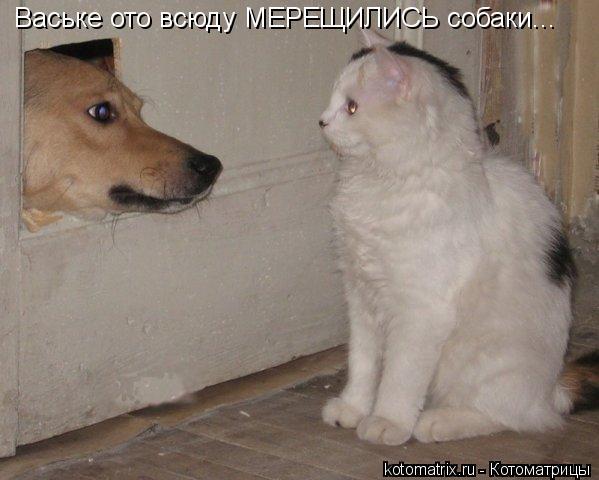 Котоматрица: Ваське ото всюду МЕРЕЩИЛИСЬ собаки...