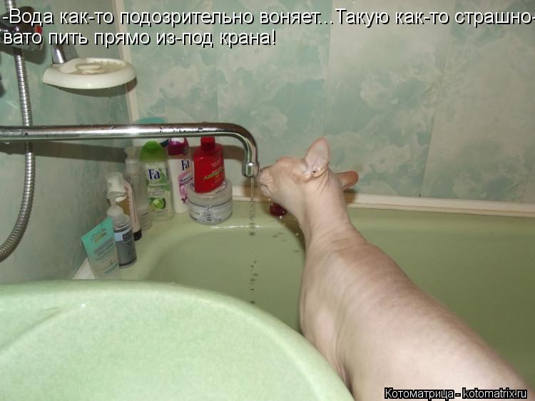 Котоматрица: -Вода как-то подозрительно воняет...Такую как-то страшно- вато пить прямо из-под крана!