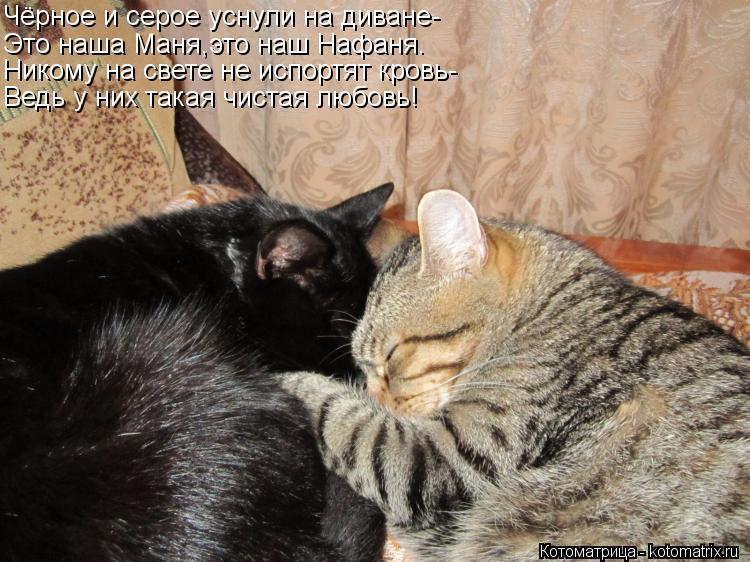 Котоматрица: Чёрное и серое уснули на диване- Это наша Маня,это наш Нафаня. Никому на свете не испортят кровь- Ведь у них такая чистая любовь!