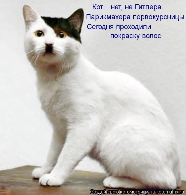 Котоматрица: Кот... нет, не Гитлера. Парикмахера первокурсницы. Сегодня проходили  покраску волос.