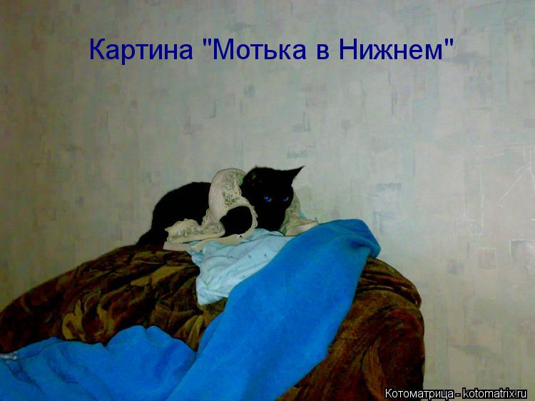 "Котоматрица: Картина ""Мотька в Нижнем"""