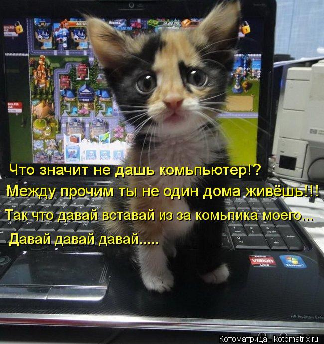 Котоматрица: Что значит не дашь комьпьютер!? Между прочим ты не один дома живёшь!!! Так что давай вставай из за комьпика моего... Давай давай давай.....