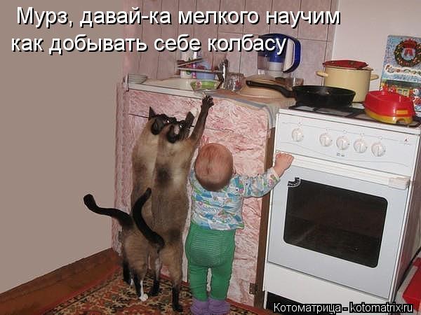 Котоматрица: Мурз, давай-ка мелкого научим как добывать себе колбасу