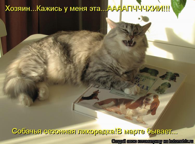 Котоматрица: Хозяин...Кажись у меня эта...ААААПЧЧЧХИИ!!! Собачья сезонная лихорадка!В марте бывает...
