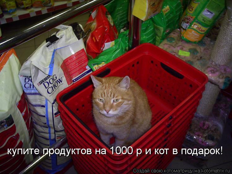 Котоматрица: купите продуктов на 1000 р и кот в подарок!
