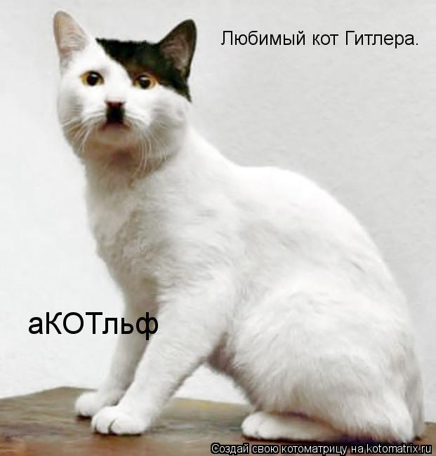 Котоматрица: Любимый кот Гитлера. аКОТльф