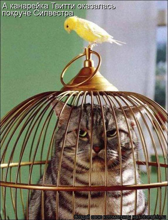 Котоматрица: А канарейка Твитти оказалась покруче Силвестра