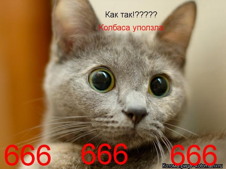 Котоматрица: Как так!????? Колбаса уползла  666 666 666