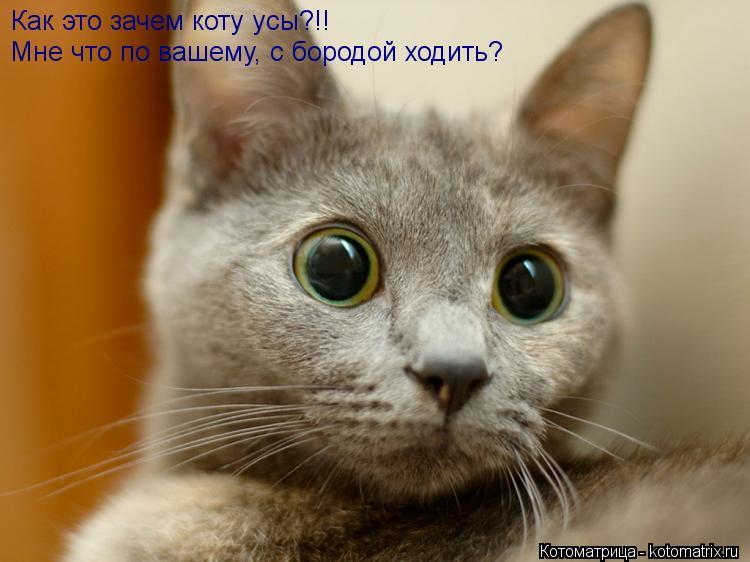 Котоматрица: Как это зачем коту усы?!! Мне что по вашему, с бородой ходить?
