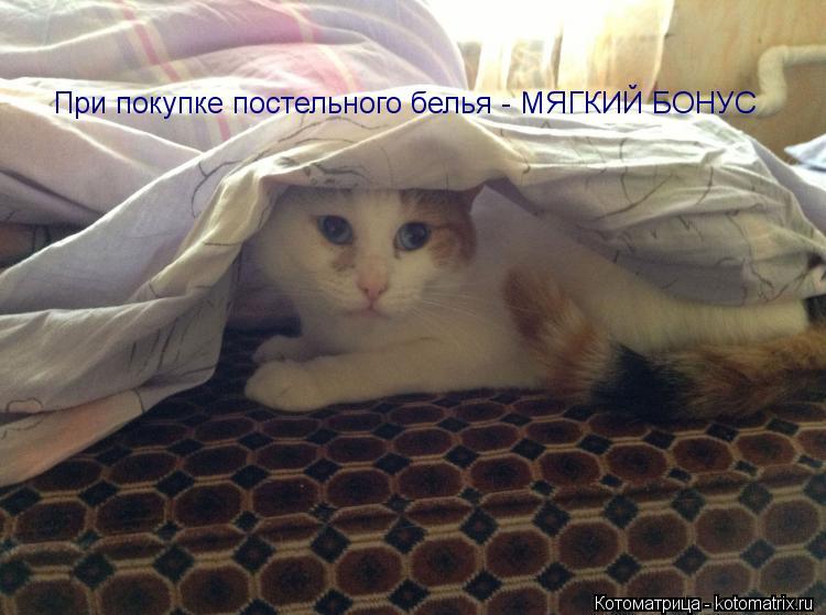 Котоматрица: При покупке постельного белья - МЯГКИЙ БОНУС