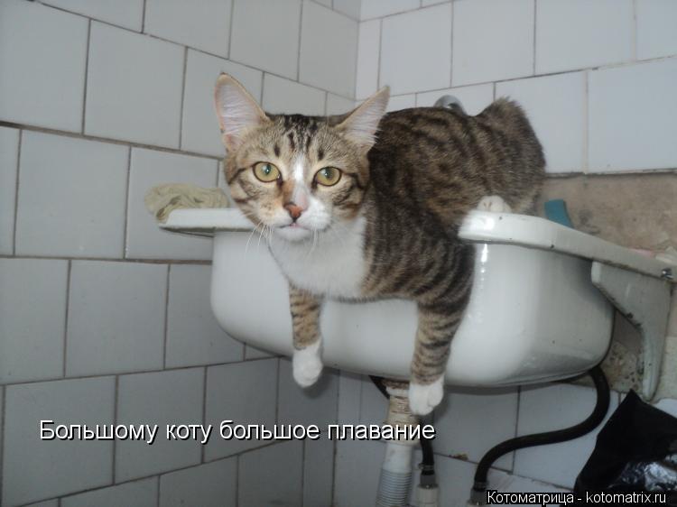 Котоматрица: Большому коту большое плавание