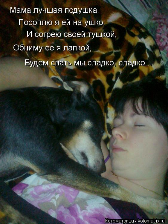Котоматрица: Посоплю я ей на ушко, Мама лучшая подушка, И согрею своей тушкой, Обниму ее я лапкой, Будем спать мы сладко, сладко…