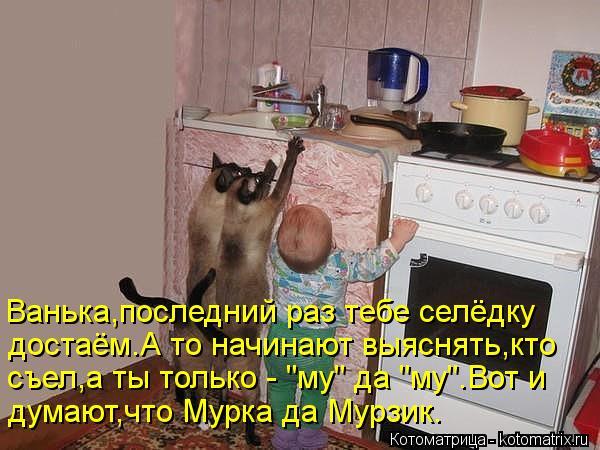 """Котоматрица: Ванька,последний раз тебе селёдку достаём.А то начинают выяснять,кто  съел,а ты только - """"му"""" да """"му"""".Вот и думают,что Мурка да Мурзик."""