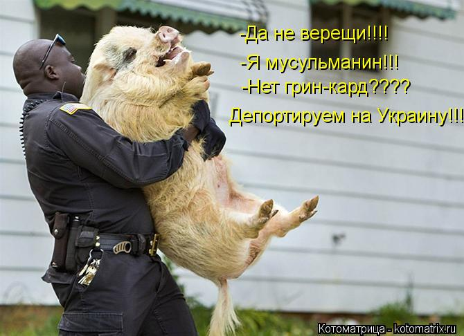 Котоматрица: -Да не верещи!!!! -Я мусульманин!!! -Нет грин-кард???? Депортируем на Украину!!!