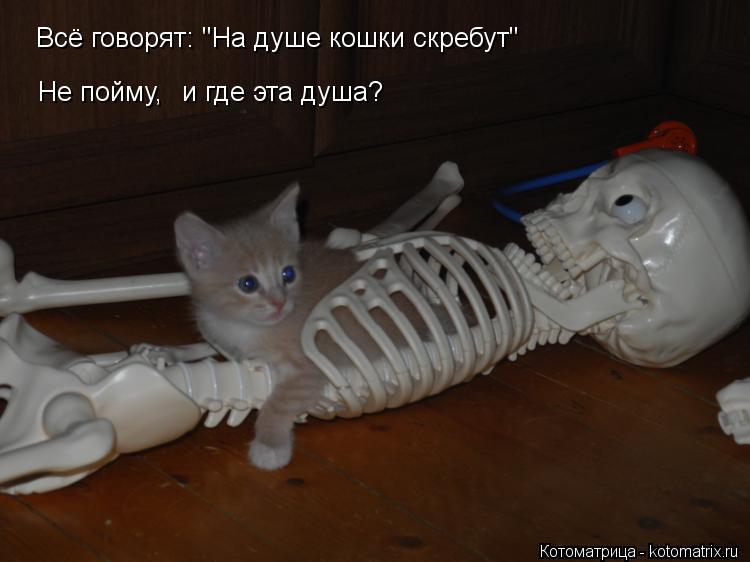 """Котоматрица: Всё говорят: """"На душе кошки скребут"""" Не пойму, и где эта душа?"""