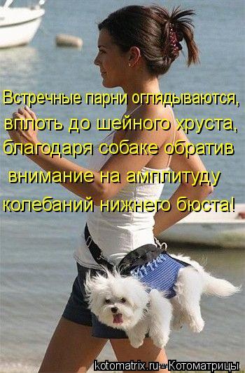 Котоматрица: Встречные парни оглядываются,  вплоть до шейного хруста,  благодаря собаке обратив  внимание на амплитуду  колебаний нижнего бюста!