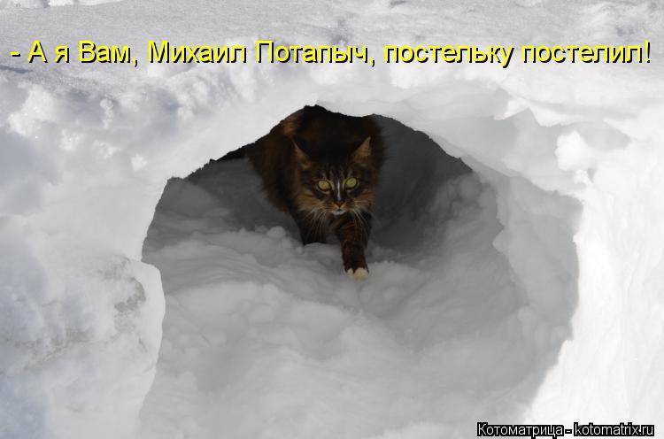Котоматрица: - А я Вам, Михаил Потапыч, постельку постелил!