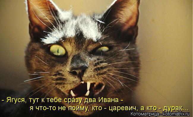 Котоматрица: - Ягуся, тут к тебе сразу два Ивана -  я что-то не пойму, кто - царевич, а кто - дурак...