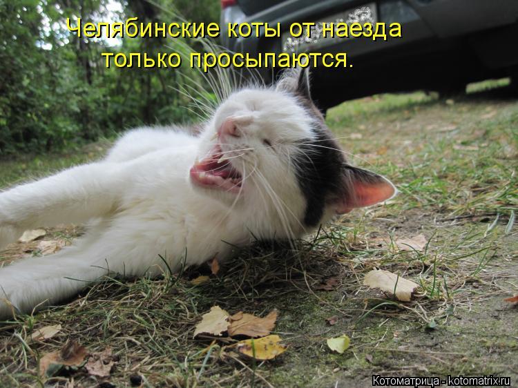Котоматрица: Челябинские коты от наезда только просыпаются.