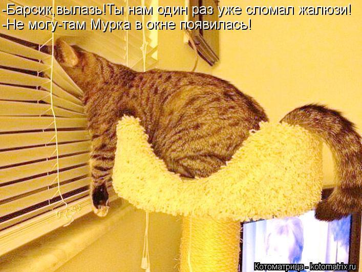 Котоматрица: -Барсик,вылазь!Ты нам один раз уже сломал жалюзи! -Не могу-там Мурка в окне появилась!