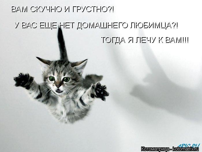 Котоматрица: ВАМ СКУЧНО И ГРУСТНО?! У ВАС ЕЩЕ НЕТ ДОМАШНЕГО ЛЮБИМЦА?! ТОГДА Я ЛЕЧУ К ВАМ!!!