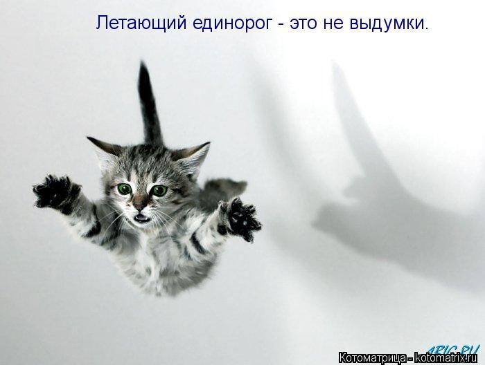 Котоматрица: Летающий единорог - это не выдумки.
