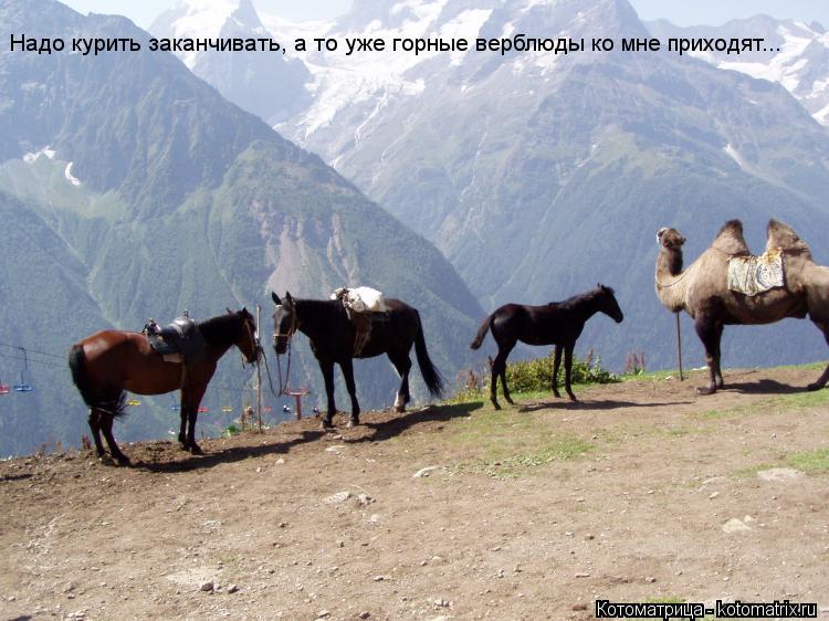 Котоматрица: Надо курить заканчивать, а то уже горные верблюды ко мне приходят...