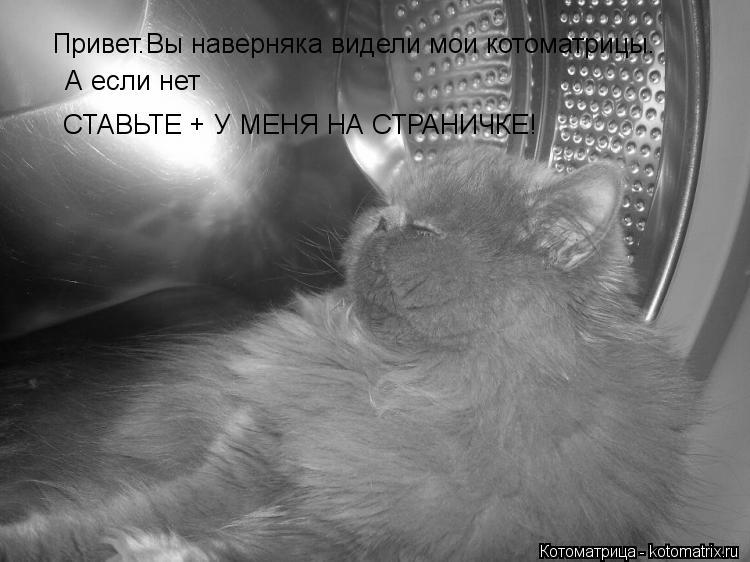 Котоматрица: Привет.Вы наверняка видели мои котоматрицы. А если нет  СТАВЬТЕ + У МЕНЯ НА СТРАНИЧКЕ!