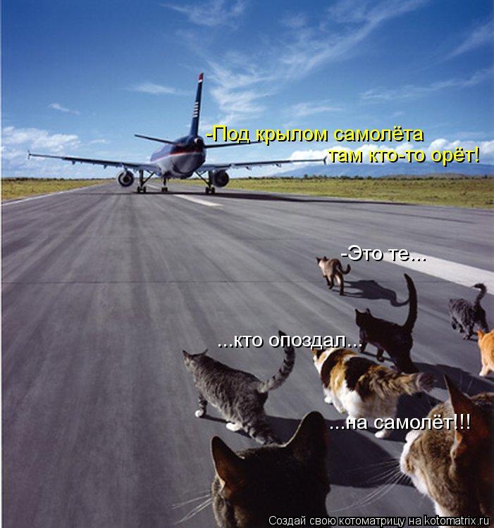 Котоматрица: там кто-то орёт! -Под крылом самолёта -Это те... ...кто опоздал... ...на самолёт!!!