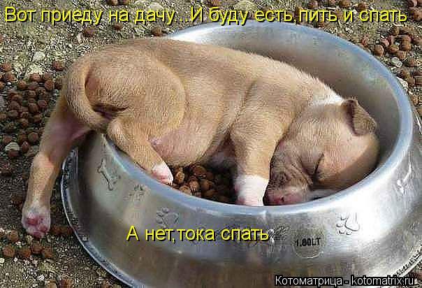 Котоматрица: Вот приеду на дачу...И буду есть,пить и спать А нет,тока спать