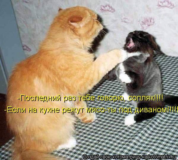 Котоматрица: -Последний раз тебе говорю, сопляк!!!! -Если на кухне режут мясо-ты под диваном!!!!!!!
