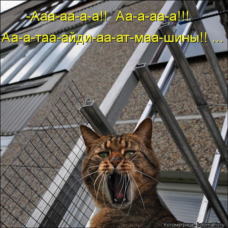 Котоматрица: -Ааа-аа-а-а!!  Аа-а-аа-а!!! Аа-а-таа-айди-аа-ат-маа-шины!! ...