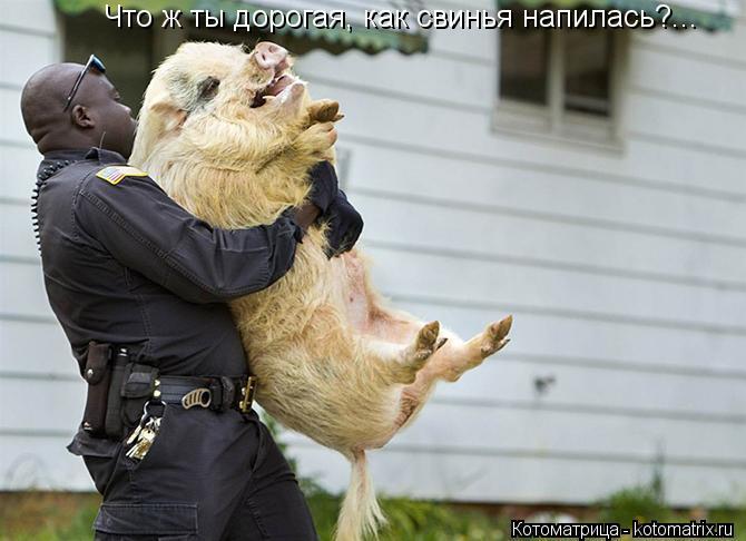 Котоматрица: Что ж ты дорогая, как свинья напилась?...
