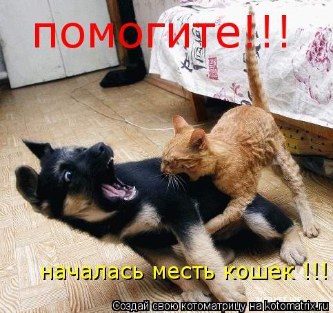 Котоматрица: помогите!!! началась месть кошек !!!