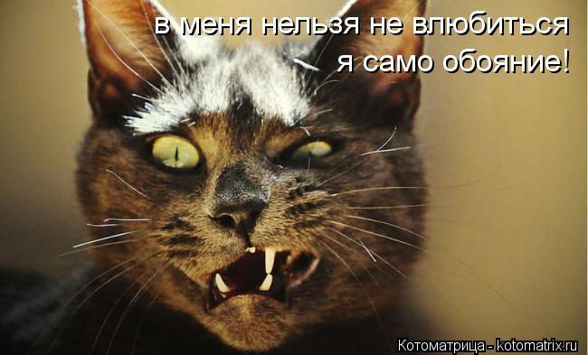 Котоматрица: в меня нельзя не влюбиться я само обояние!