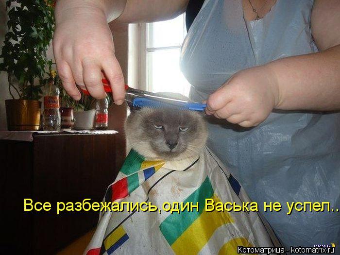 Котоматрица: Все разбежались,один Васька не успел..