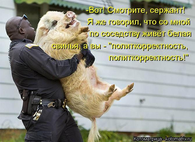 http://kotomatrix.ru/images/lolz/2013/05/01/kotomatritsa_vo.jpg