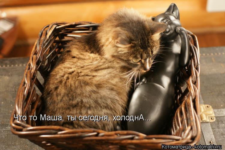 Котоматрица: Что то Маша, ты сегодня, холоднА...