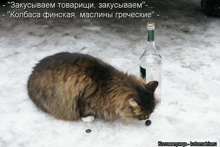 """Котоматрица: - """"Закусываем товарищи, закусываем""""-... - """"Колбаса финская, маслины греческие"""" - ..."""