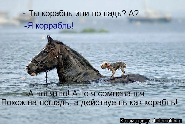 Котоматрица: Ты корабль или лошадь? А? - -Я коррабль! -А понятно! А то я сомневался Похож на лошадь, а действуешь как корабль!