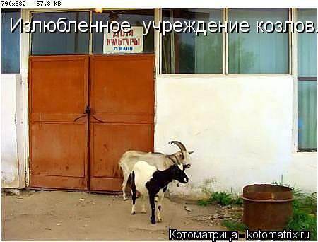 Котоматрица: Излюбленное  учреждение козлов.