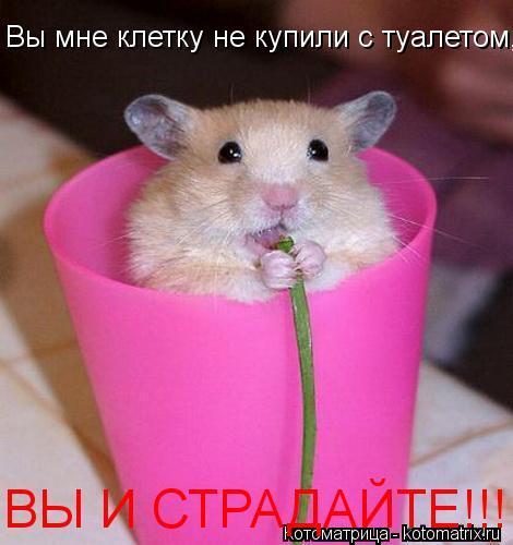Котоматрица: Вы мне клетку не купили с туалетом, ВЫ И СТРАДАЙТЕ!!!