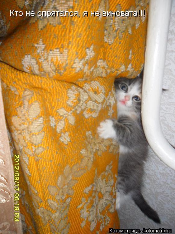 Котоматрица: Кто не спрятался, я не виновата!!!