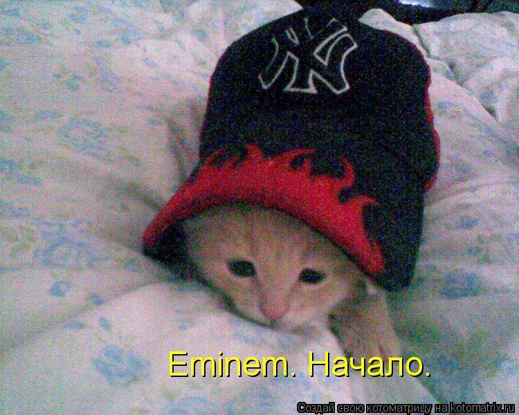 Котоматрица: Eminem. Начало.
